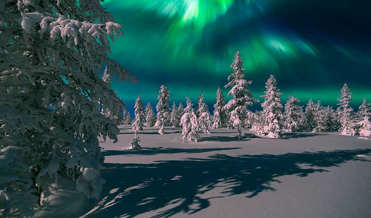 Snow covered trees and the northern lights