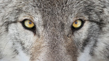 Building IT Defenses – Keeping the Wolves from the Company Gate